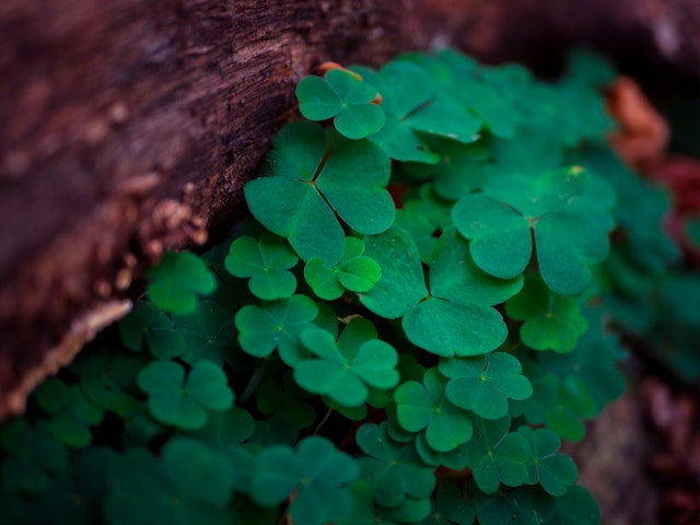 Luck of the Irish- 2020 Saint Patrick's Day